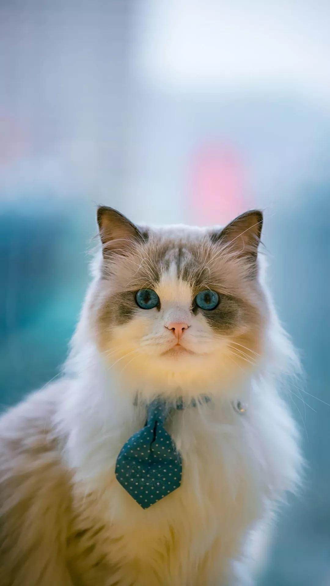 猫片壁纸 :生活不断拍打我们的脸皮,最后不是脸皮厚了,是肿了!插图81