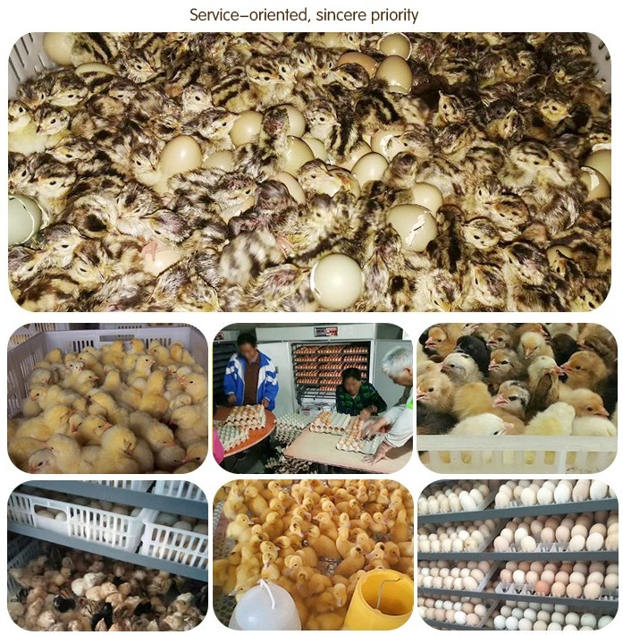 5000 eggs 10000eggs mini and large chicken egg incubators from China