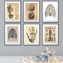 Impresiones y pósteres Vintage de ciencia humana en blanco y negro, lienzo de anatomía médica, pintura de la pared de la clínica médica