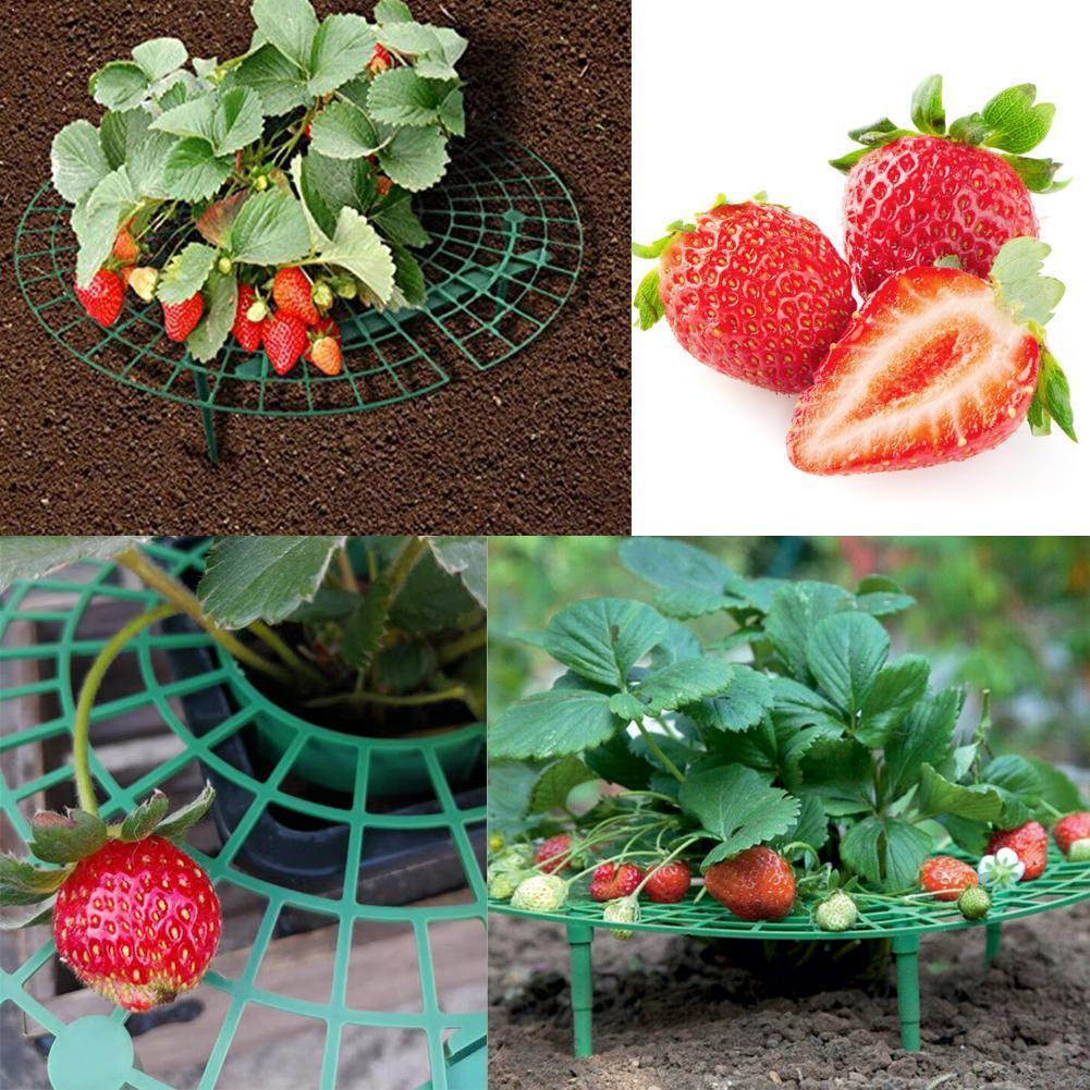 30x30CM Strawberry Stand Frame Holder Flower Climbing Support Balcony Fruit Rack Vine Pillar Planting Gardening Stand Plant X5G3
