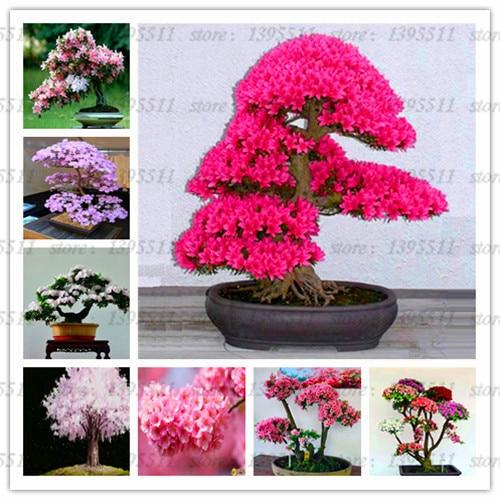 10pcs / Pack Sakura Bonsai Tree Plant Flower Pot Indoor Home Garden Decoration