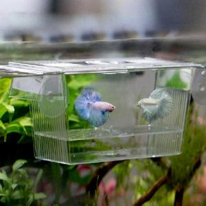 Acrylic Fish Tank Breeding Iso