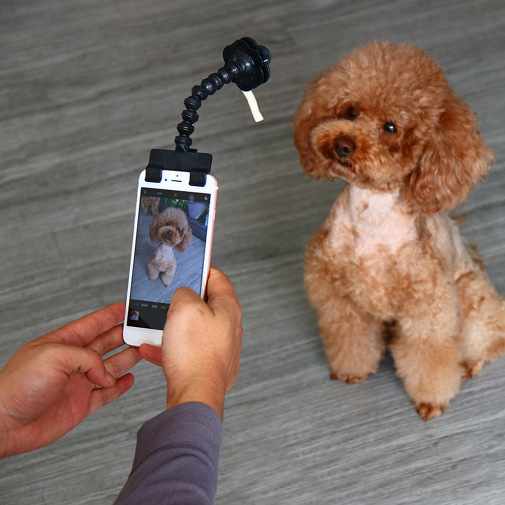 font b Pet b font Selfie Stick For Dogs Cat Photography Tools font b Pet