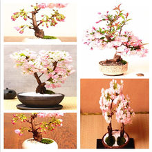10 Pcs Mini Sakura Bonsai Flower Cherry Blossoms Tree Like Azalea Flower Rhododendron Bonsai Plants For Home & Garden Bonsai(China)