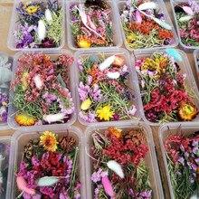 Pressionado flores pequenas flores secas scrapbooking seco diy preservado flor decoração casa mini bloemen flores secas