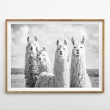 Cute Animals Poster Canvas Painting Black White Alpaca Photography Wall Art Pictures Living Room Nursery Modern Home Decor