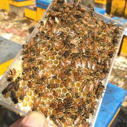 500g pszczelarstwo gospodarstwa czysty naturalny miód do żucia miód pudełko pszczoły Nest o strukturze plastra miodu ula odżywianie zdrowy kobiece jedzenie deser w Ule od Dom i ogród na
