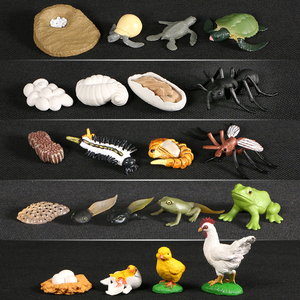 Animals Growth Cycle Life Cycle Model Set Frog Ant Mosquito Sea Turtle Simulation Model Action Figures Teaching Material For Kid