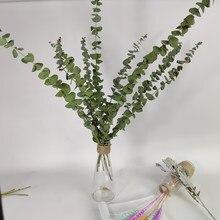 Feuilles d'eucalyptus séchées naturelles, 1/2/5 pièces, vraies plantes de décoration pour la maison, accessoires de photographie, fausses plantes pour fête de jardin