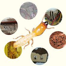 Termite Bait Station Garden Termite Bait Garden Insect Killer Pest Control Tool
