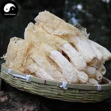 Phallus Indusiatus, Stinkhorn Fungus, Bamboo Fungus, Zhu Sun kaaral happy sun bamboo oil