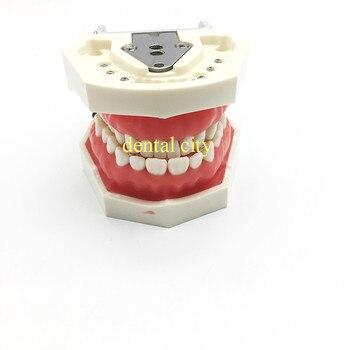 Free Shipping Teeth Teaching Model Dental Soft gingiva 200H Type Removable Teeth Model