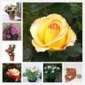 100 шт. семена парфюма розы бонсай домашний цветок Природные растения садовая ароматная цветная эссенция розы маска для губ UN3