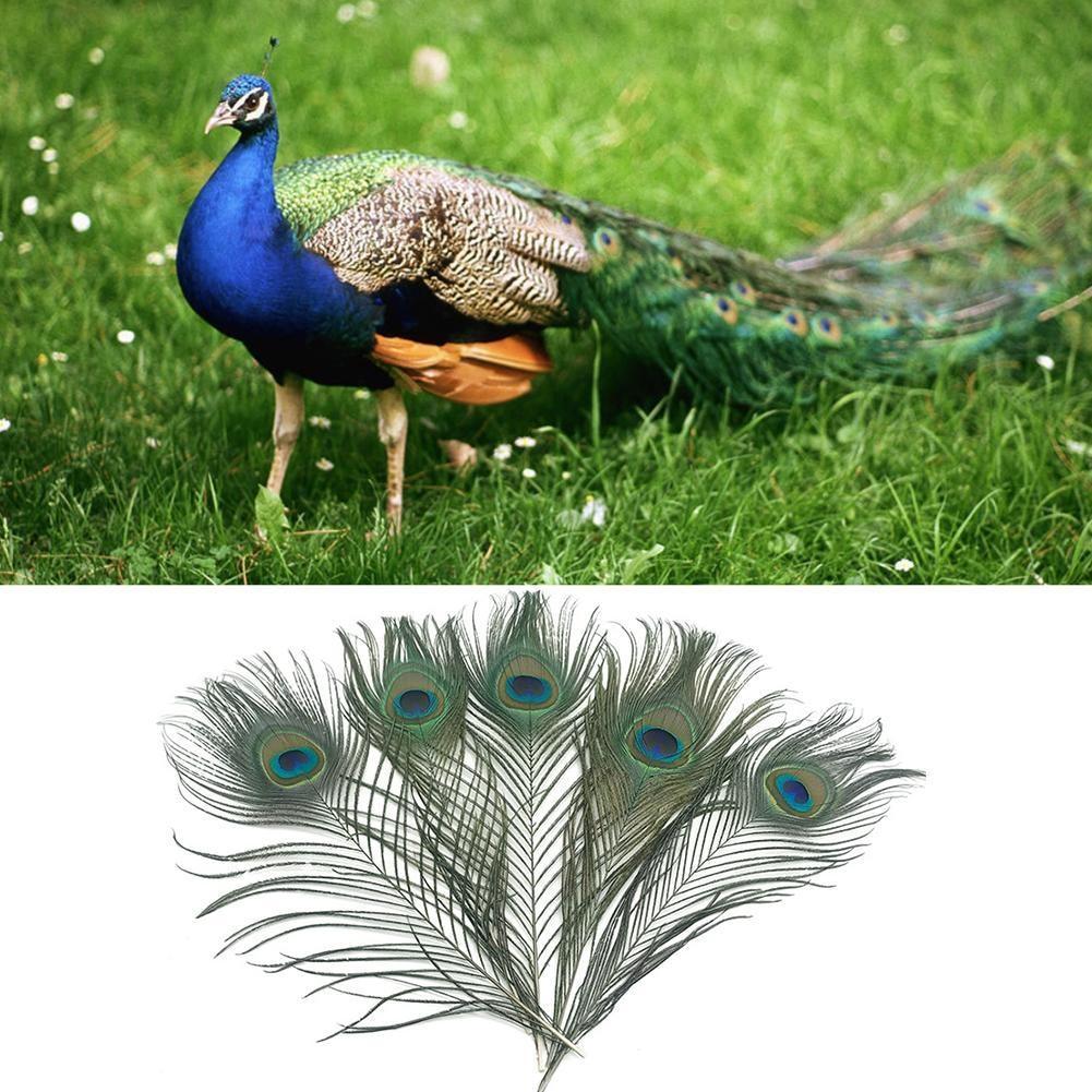 Peacock Bird Colourful Iron On Transfer A5