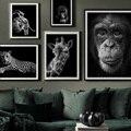 Животное холст постер черно-белая настенная художественная живопись тигр обезьяна настенный Декор картина украшение комнаты эстетическое...