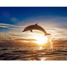 DIY Oil Painting By Numbers Animal Acrylic Paint Canvas Kits Coloring Dolphin Sunset Unframe Home Decoration