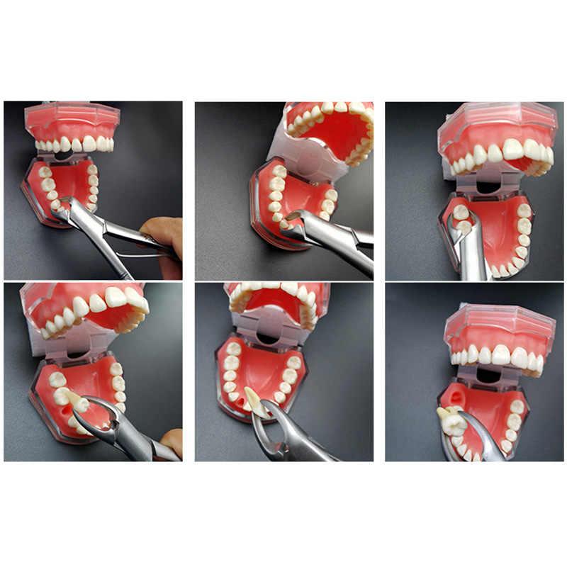 שיניים מלקחיים ילדי ילדים נירוסטה שיניים מלקחיים חילוץ Rhizagra עבור טוחנות חותכות פאנג חילוץ מכשירים