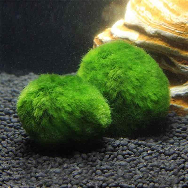 5pcs Marimo מוס כדור אקווריום צמחי חממה Cladophora כדור קישוטי האקווריום אקווריום דגי טנק צמחי אזוב