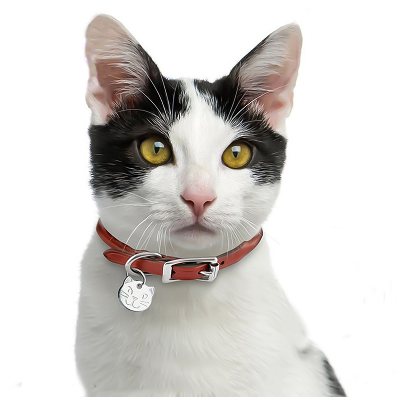Personalized Engraved Cat Name Tag Anti-lost Stainless Steel Dog Tag For Cat Collar Accessory Customized Pet ID Tags image