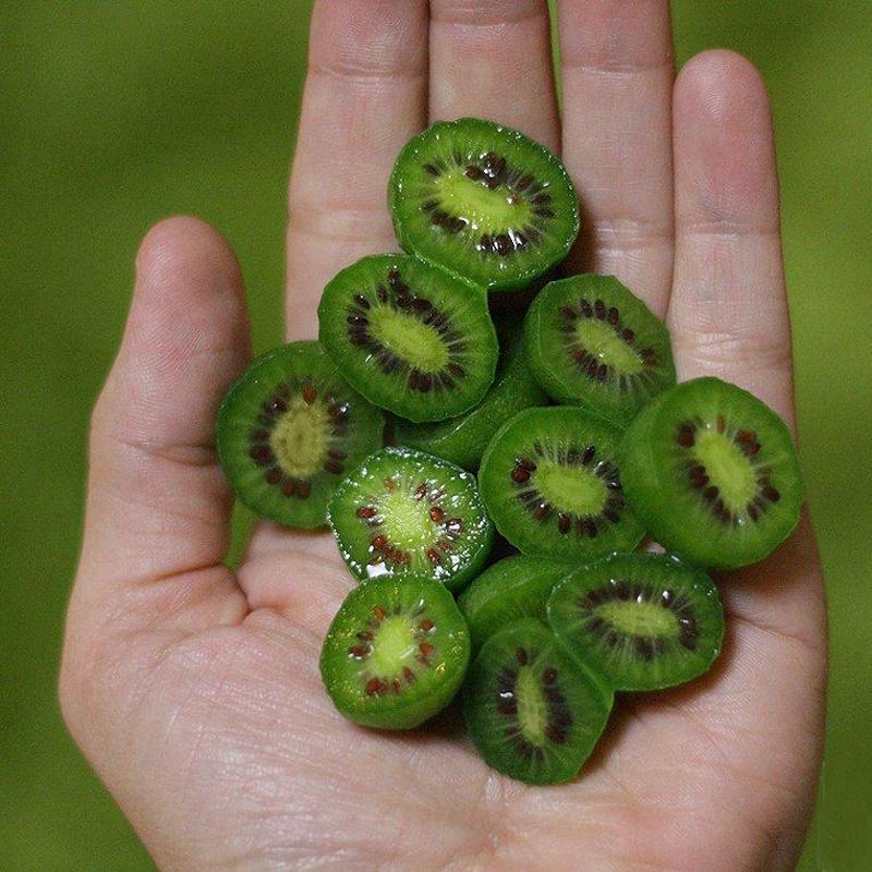 Plant Fruits Bath Salts Mini Kiwi Berry Essence 160Pcs SG-14-A