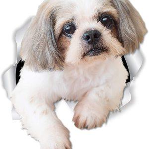 Dawasaru Lovely Shih Tzu Dog C
