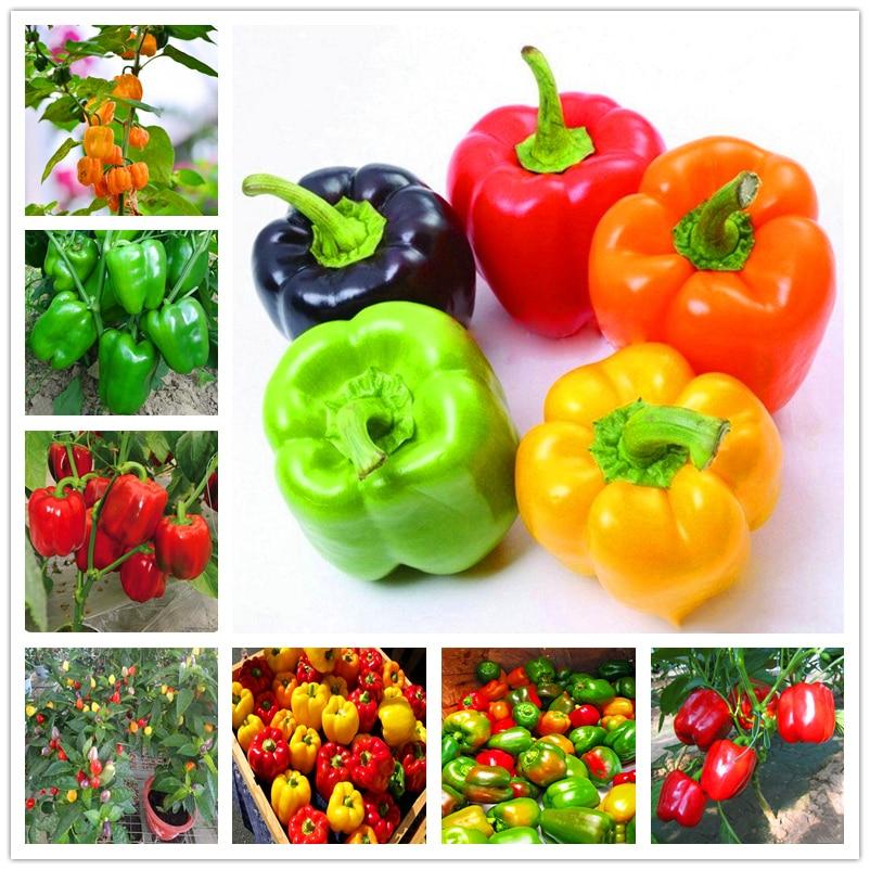 Plant Flower Bath Salts Sweet Pepper Vegetable Essence 100Pcs XZZ-316