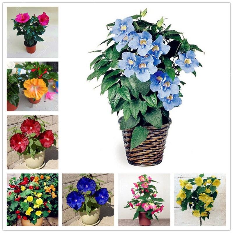 100Pcs/Bag Giant Double Petals Hibiscus Plant Rare Blue Hibiscus Bonsai Flower Perennial Indoor Plant For Home Garden Decoration