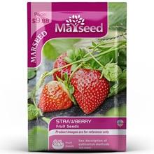 American Heirloom MARSEED Strawberry Vegetables Seedsplants Seedling Garden Outdoor