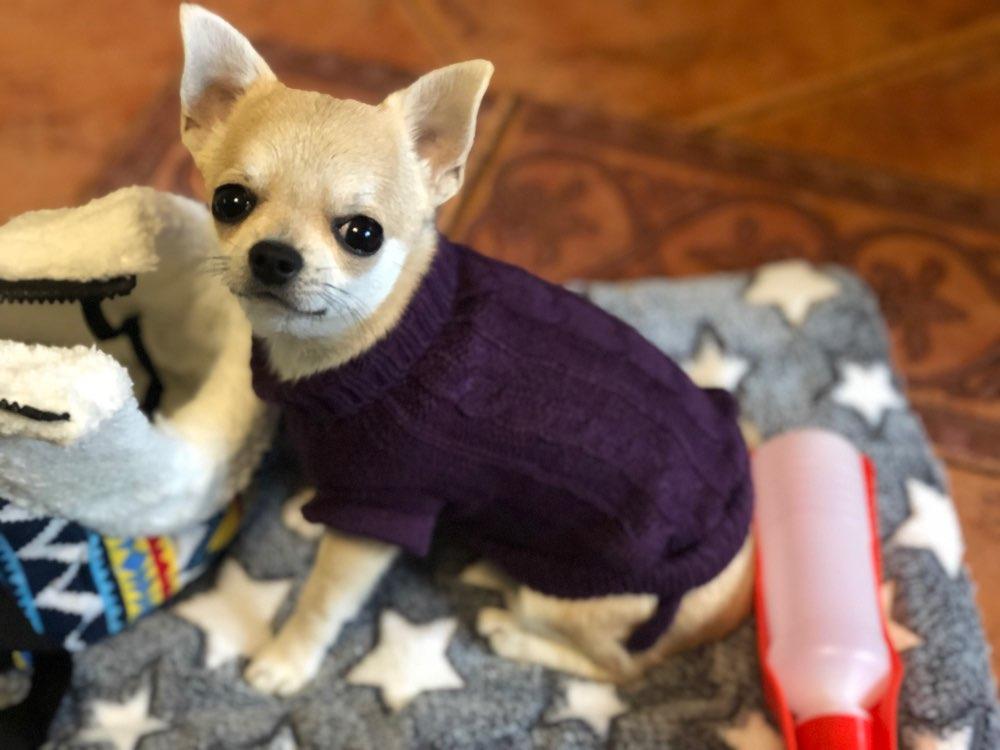 Sueter tejido para mascota 4