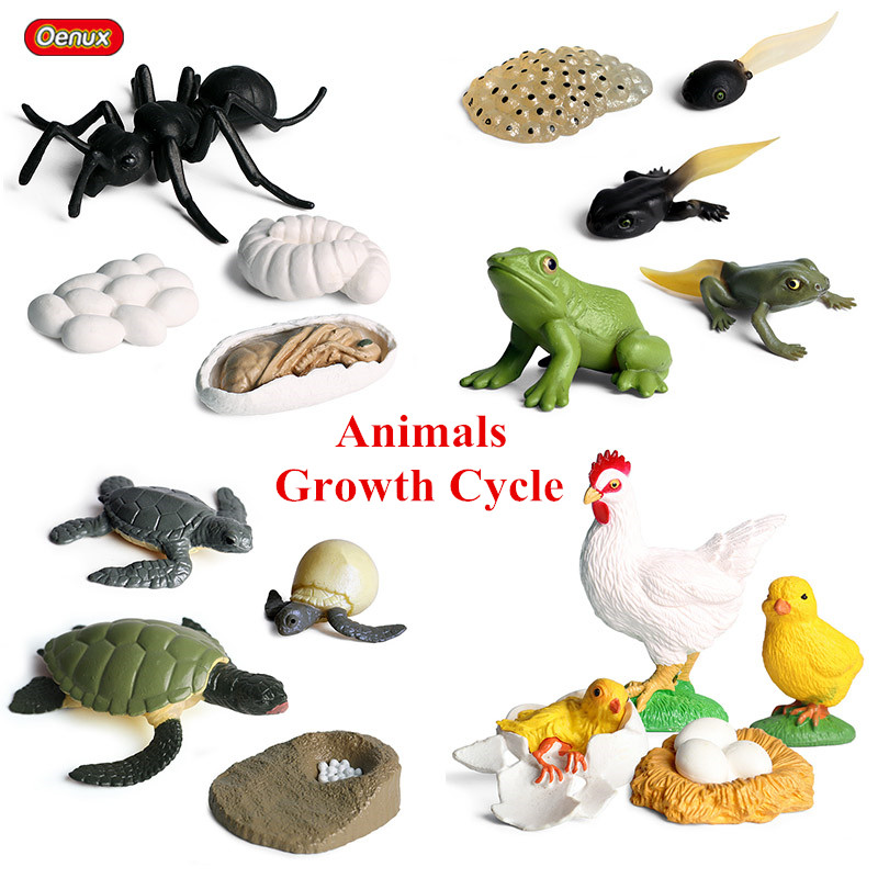 Oenux Classic Animals Growth Cycle Model Simulation Hen Ant Mosquito Action Figures Figurine Lovely Baby Educational Kids Toy
