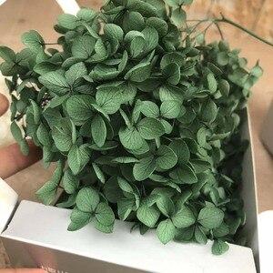 Image 5 - 20G Preserved Flowers of Viburnum Macrocephalum,Dry Natural Fresh Forever Hydrangea Eternelle Rose,DIY Immortal Flower Material