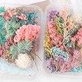 Смешанные красивые настоящие сушеные цветы натуральные цветы для художественного ремесла Скрапбукинг Смола ювелирное ремесло изготовлен...