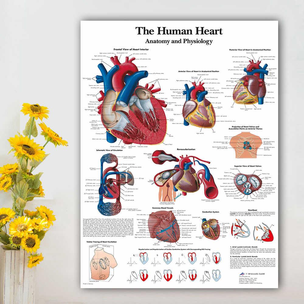 Spierstelsel Posters Zijden Doek Anatomie Grafiek Menselijk Lichaam School Medische Wetenschap Educatief Levert Woondecoratie