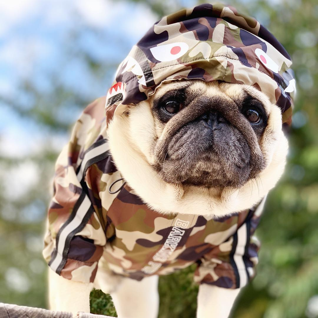 Dog Clothes Camouflage 21