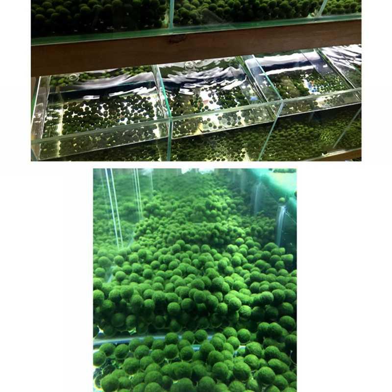 كرات زخرفية مائية ، كرات معيشية طبيعية لخزان السمك على شكل قلب ، كرات طحلب ، حوض السمك ، لوازم المناظر الطبيعية الصغيرة