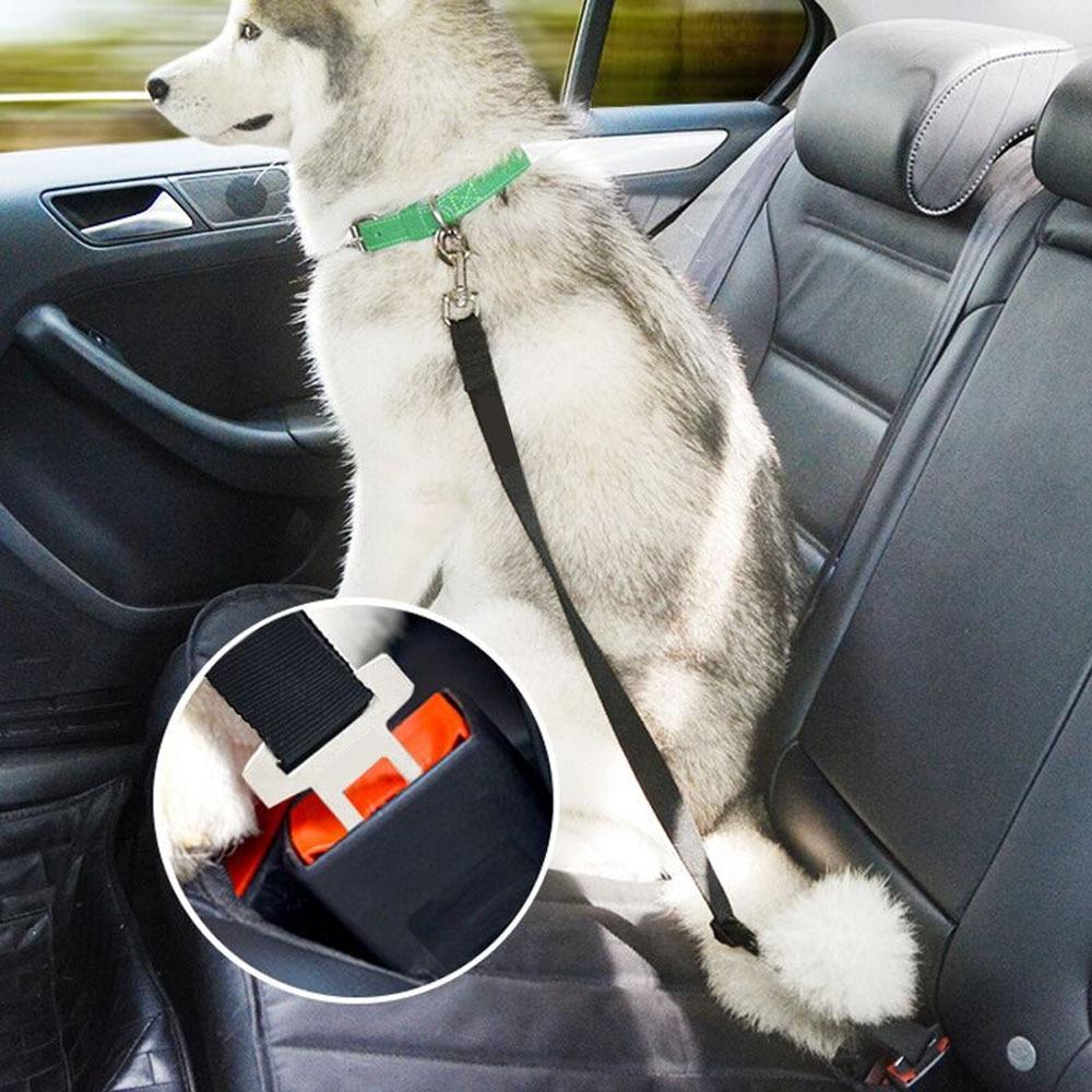 狗安全带4