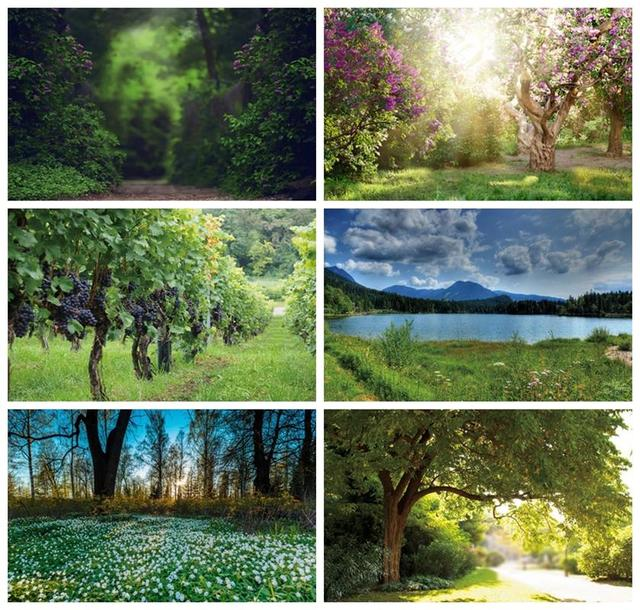 Laeacco Spring Natural Scenery Backgrounds Jungle Forest Wonderland Baby Child Portrait Photography Backdrops Newborn Photocall