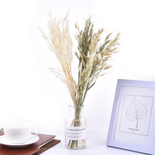 Bouquet de blé naturel seché pour décoration, vrai, fleurs, pampas, herbe, déco pour mariage ou fête, bricolage, artisanat, scrapbook