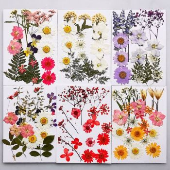 QIAOQIAO DIY small Dried Flowers Pressed Preserved Flower Decoration Home Mini bloemen