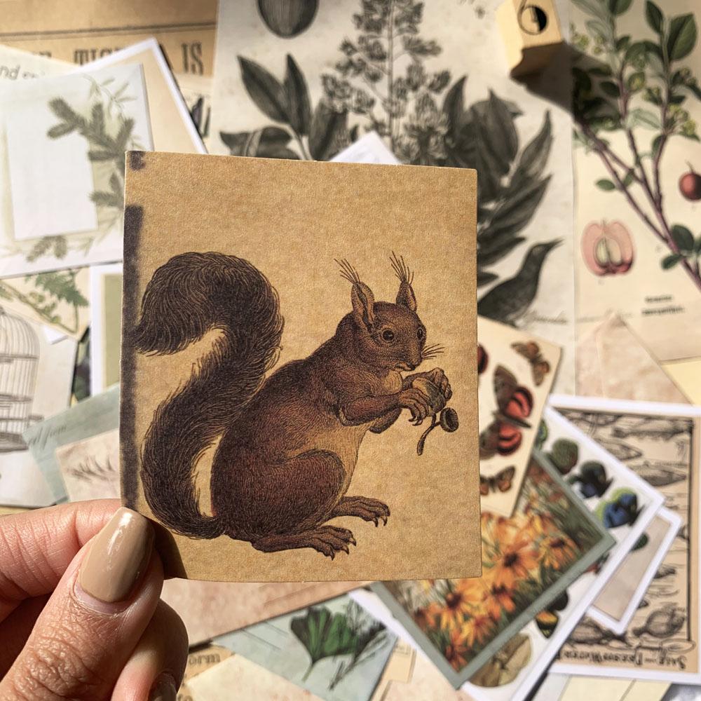 Vintage Natural Notes/Renaissance/A Trip To The Past/Specimen Collection Sticker DIY Scrapbooking Label Diary Retro Sticker