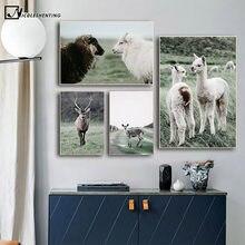 Alpaca llama ovelhas animais poster estilo nórdico impressão em tela escandinavo arte pintura da parede imagem para sala de estar moderna decoração
