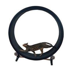 Marco de escalada para gatos, juguete para gatos, juguete deportivo para gatos, rueda de escalada para gatos, rueda de correr para gatos