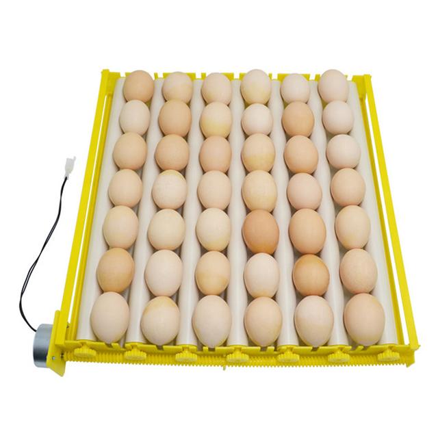 Kartuzy. Dzika kaczka wysiaduje jaja na świeżo usypanym grobie