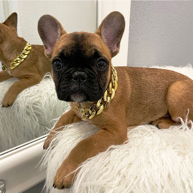 Pet Necklace Thick Gold Chain Plated Plastic Adjustable Dog Collar For Medium Large Dogs Bulldog Training Pets Accessories 4