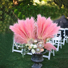 30 stücke Echt Getrocknete Kleine Pampas Gras Hochzeit Blume Haufen Natürliche Pflanzen Valentines Tag Dekor Hause Freies Verschiffen Dekoration