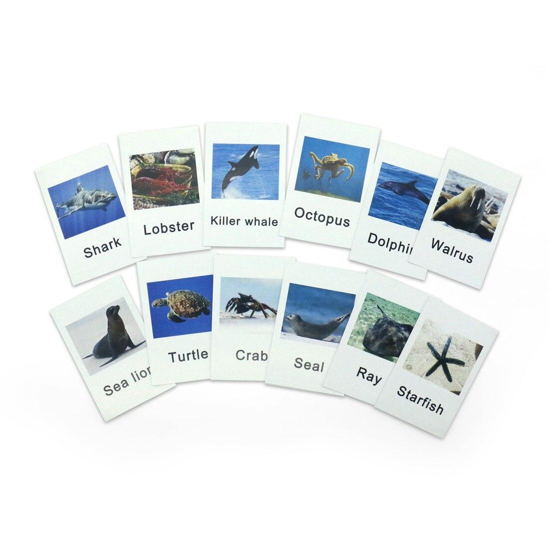 Montessori Materials Animal Words Learning Toys Flash Cards Sensory Toys Educational Preschool Juguetes Montessori B0244H