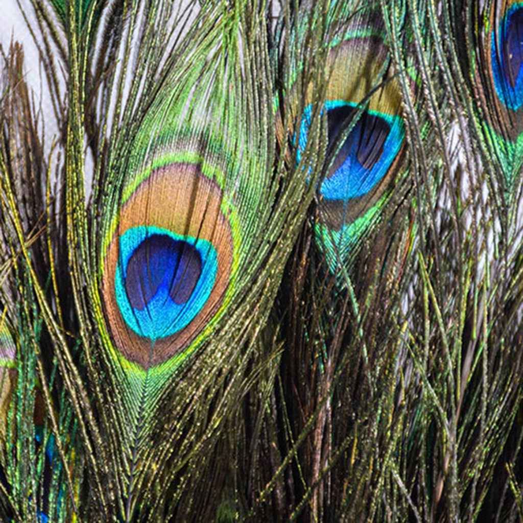 New Lot 100 Natural Real Peacock Tail Eye Feathers 23-30cm//10-12Inches Ornament
