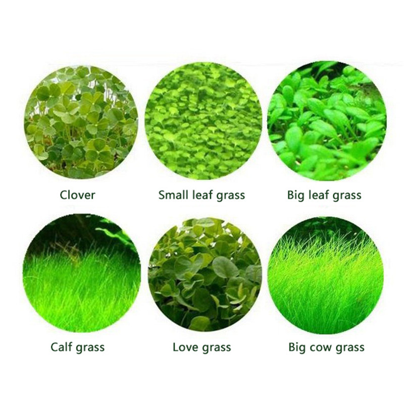 Mini-leaf Foreground Grass Big Leaf Pearl Water Grass Seed Fish Tank Landscaping Decoration Water Grass Seed 4yang