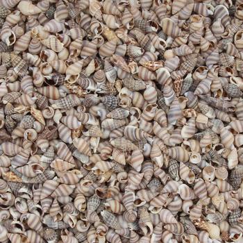 20 Gram Mini muszla naturalne morskie muszle Coquillage wystrój plażowy Craft Diy styl marynistyczny akwarium muszle muszla zdobienie tanie i dobre opinie Zwierząt Organiczny materiał B03464 5-15mm