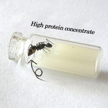 Special Food For Ant Castle Convenient And Simple Food For Ants High Nutrition Not Easy To Mold And High Protein